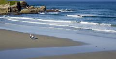 Fishing (pedritop (www.ppedreira.com)) Tags: mar fishing playa galicia lugo maria catedrales pescando cantabrico