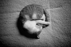 zzZZ (mcg0011) Tags: pet cute blancoynegro feline felino mycat mascotas durmiendo migato monocromatico monchat meinekatze