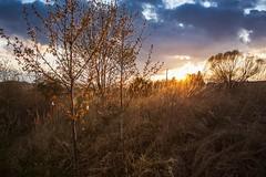 Evening mood (frantiekl) Tags: trees light sunset sky nature colors sunshine clouds landscape evening spring blossom outdoor straw april czechrepublic bohemia eveninglight colorsofnature krajina proda eveningmood blovice
