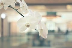 Fleet (Carrie McGann) Tags: flowers mall losangeles interesting nikon orchids bokeh beverlycenter 040416