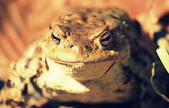 crazy frog (zool18) Tags: macro nature animal canon frog
