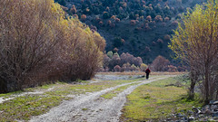 Goodbye (RKAMARI) Tags: autumn trees fall nature forest walking friend photographer outdoor path human willows alizekikaya