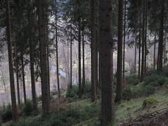 IMG_8798 (Bike and hiker) Tags: ardennen ardennes eifel hellenthal narzissen narcissen oostkantons rocherath olef krinkelt holzwarche jansbach bachtaler
