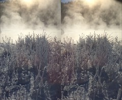 This one looks great in 3D. The frozen ground really stands out. (JOHN . T) Tags: stereoscopic 3d d stereo3d stereoviews 3dphotos 3dcontent poppy3d wpoppy3
