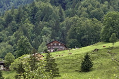 Peaceful (winkler.roger) Tags: landscape austria mellau vorarlberg bregenzerwald mellental