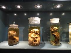 Spotlight (Sysli) Tags: berlin animals germany dead preserved deformed fetuses
