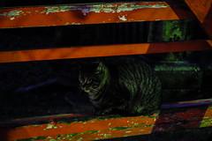Today's Cat@2016-01-29 (masatsu) Tags: cat pentax cc100 catspotting mx1 thebiggestgroupwithonlycats