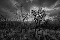 Ravaged landscapes (benpearse) Tags: world life new blue plant mountains art heritage landscape artist photographer ben fine january australia commercial valley nsw prints bushfire regrowth megalong burnttrees 2016 pearse