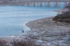 Tronco sommerso (DarioMarulli) Tags: lake lago nikon ponte laquila parconazionaledelgransasso d3200 capotosto mascioni nikonclubit