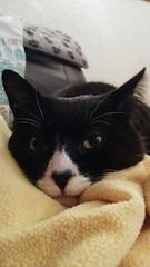 Tired kitty (KT-wu) Tags: sleeping blackandwhite cute cat kitty whiskers tuxedocat blackandwhitecat