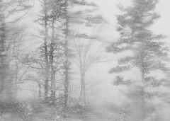 (amy20079) Tags: trees winter blackandwhite distortion snow forest landscape maine snowstorm newengland blurred february winterstorm blurring nikond5100