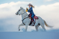 Snow White (www.toddklassy.com) Tags: ranch county winter woman usa white snow cold west girl beautiful beauty field animal horizontal clouds rural hair person countryside cool montana bozeman ride unitedstates adult cloudy snowy horizon longhair fast riding teen blonde attractive western flannel denim copyspace cowgirl care middle sideview cowboyhat rider graceful equestrian horseback centered hilltop stallion saddle equine tack gallop ranching quarterhorse 20s caucasian westernwear galloping trotting reins kickingup