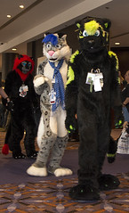 DSC_0795 (Acrufox) Tags: midwest furfest 2014 furry convention december hyatt regency ohare rosemont chicago illinois acrufox fursuit fursuiting mff2014