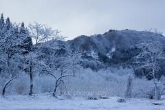 s-IMG_4049 (kenta_sawada6469) Tags: trees winter white mountain snow nature landscape scenery snowscape snowcovered snowscene