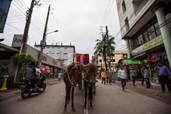 5D8_7216 (bandashing) Tags: england people horse manchester sharif ride outdoor cart sylhet bangladesh skeletal socialdocumentary malnourished mazar dargah aoa shahjalal skinandbones shorif bandashing akhtarowaisahmed dargahroad