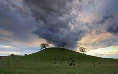 A Stroll on the Knoll (ernogy) Tags: california foothills green landscape outdoors folsom grassland knoll raincloud ernogy