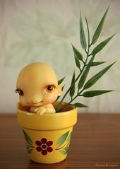 Ginger Root Gnome (Ebony Dragon) Tags: flower ginger doll pot nana bjd ccc dae djah