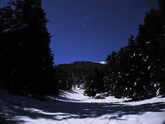 Clairire enneige (wishima) Tags: sky snow tree night montagne stars ciel arbres neige paysage nuit toiles