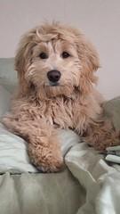 Sophia's adorable little boy Raleigh!