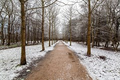 At last: a little bit of snow! (Ren Maly) Tags: trees snow ex canon sigma 5d 20mm 1820 renmaly