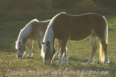 DSC06998 (jmbedel) Tags: horse mare equine rimlight