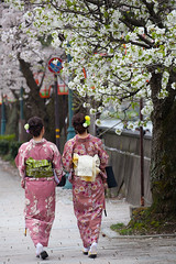 Two Women in Kimono Enjoy Cherry Blossoms (baddoguy) Tags: people tree japan vertical walking photography back women adult fulllength tourist formalwear cherryblossom kimono behind copyspace twopeople kanazawa japaneseculture adultsonly welldressed traditionalclothing colorimage pedestrianwalkway beautyinnature pinkcolor ishikawaprefecture onlywomen onlyjapanese japaneseethnicity humanback humanbodypart