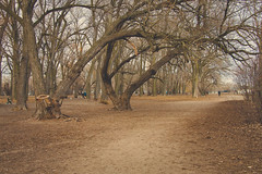 Pathway to Cherry Beach (A Great Capture) Tags: park trees brown toronto ontario canada beach nature cherry arch photographer path canadian clarke pathway cherrybeach tees on agc ald ash2276 adjm ashleylduffus wwwagreatcapturecom agreatcapture