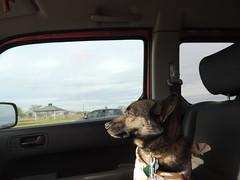 Copilot (ptcruiser4dogs) Tags: dog lake woody servicedog pinewood