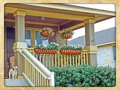 Chateau du Cookie (et Lulu) (johnnyp_80435) Tags: texas shihtzu porch frontporch pflugerville