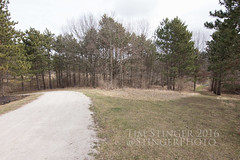 Which Path Will You Choose? (Tim Stinger) Tags: forest tim illinois path stinger preserve choose burnidge