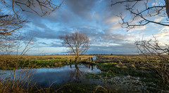 View to the harbour (garybroughton05) Tags: uk blue trees england sky sunlight color colour green water grass clouds reflections landscape golden suffolk spring colorful bare wide calm marsh colourful common southwold eastanglia canon1740l sonya7