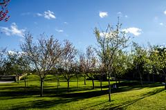 Parque Tangu (Dani Uribe P.) Tags: parque verde brasil curitiba rbol entrada otoo rvore outono tangu
