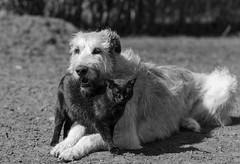 _F012782-2 (b.kunst17) Tags: bw dog pet cats pets white black dogs animal animals cat tiere nikon hund ii sw katze 28 70200 katzen haustier schwarz hunde vr tier haustiere weis d3s