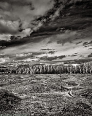 Mima Mounds 2 [1600ir-N] (mjardeen) Tags: trees sky blackandwhite bw white black texture grass clouds contrast landscape ir washington pattern sony 28mm mima infrared wa f2 fe mounds 282 a7ii landscapesshotinportraitformat niksilverefex a7m2 ilce7m2
