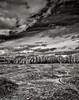 Mima Mounds 2 [1600ir-N] (mjardeen) Tags: trees sky blackandwhite bw white black texture grass clouds contrast landscape ir washington pattern sony 28mm mima infrared wa f2 fe mounds 282 a7ii landscapesshotinportraitformat niksilverefex a7m2 ilce7m2