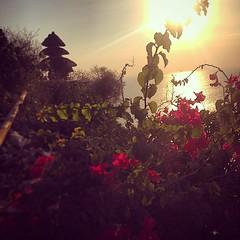#uluwatutemple #uluwatu #bali #flowers #sunset (djulinho) Tags: flowers sunset bali uluwatu uluwatutemple uploaded:by=flickstagram instagram:venuename=purauluwatu instagram:venue=74639004 instagram:photo=80428069558091921716134992