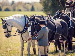 Carriage Groom (Jen MacNeill) Tags: horse race groom md carriage maryland harness races equine fairhill