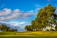 Golf Course late afternoon (eggwah123) Tags: old trees sunset sky zeiss golf landscape sony sydney bluesky golfcourse fullframe manualfocus ff cy lightroom carlzeiss manuallens oldlens mirrorless legacylens manualfocuslens planar50mmf17 sonya7 lightroom5