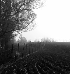 Wander (acharya_mr) Tags: morning fog fields tamilnadu ooty southindia incredibleindia doddabetta iphonephotography iphone5s
