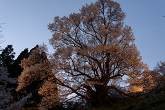 52Butsuryuji Temple (anglo10) Tags: sunset japan cherry temple
