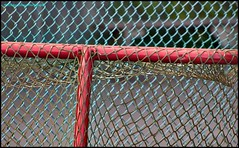 The Netminder (Beachhead Photography(Is in standby mode)) Tags: red net face lines fence outdoors goal tenniscourt beachheadphotography