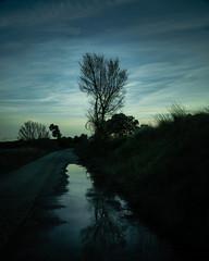 Hoya de Huesca-2 (dACE :)) Tags: espaa plants night clouds mirror noche plantas cel arbres nubes reflejo fields es camps campos nit plantes reflexe nuvols tarda aragn camins loporzano