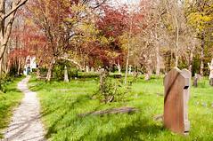 Begraafplaats Groenesteeg (de_buurman) Tags: friedhof cemeteries tree nature netherlands cemetery graveyard leiden cementerio nederland natuur boom 1755mmf28g cemitrio nikkor begraafplaats fagus cimetire europeanbeech kerkhof beuk cementerios fagussylvatica cemitrios cimiteri groenesteeg cimetires friedhoefe cimiteris allrightsreserved nikond300 debuurman edjansen