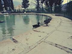 The pond (MarthaPR) Tags: park parque trees naturaleza lake nature lago pond ducks estanque patos