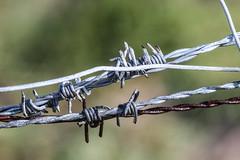 Draad (MJ Klaver) Tags: wet rain fence wire nederland m42 barbedwire ameland 135mm kust carlzeissjena explored oldlens ausjena inexplore manualfocuslens carlzeissjenasonnar135mmf35mcred