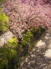 Frhlingsgre (Spring regards) (berlin-belichtet.de) Tags: light shadow sun tree berlin nature germany licht spring blossom natur olympus sonne schatten baum omd frhling baumblte omdem10