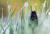 Freeze (photosenvrac) Tags: macro fleur froid couleur givre sigma150 thierryduchamp