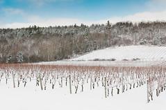 Gaspereau Vineyards (Grant is a Grant) Tags: ca winter canada vineyard december novascotia ns kitlens wolfville winery 1855 annapolisvalley gaspereau nikkor1855mm nikond90 vsco gaspereauvineyards gaspereauwinery vscofilm
