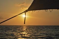 Sunset Sail (DaveTaylor2014) Tags: sun water tanzania nikon sailing sail glint pemba glistening d3200