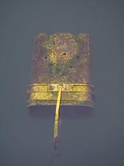 Tidy Cat (photography_isn't_terrorism) Tags: water floating gross algae fishingbucket catlitter tidycat litterbucket